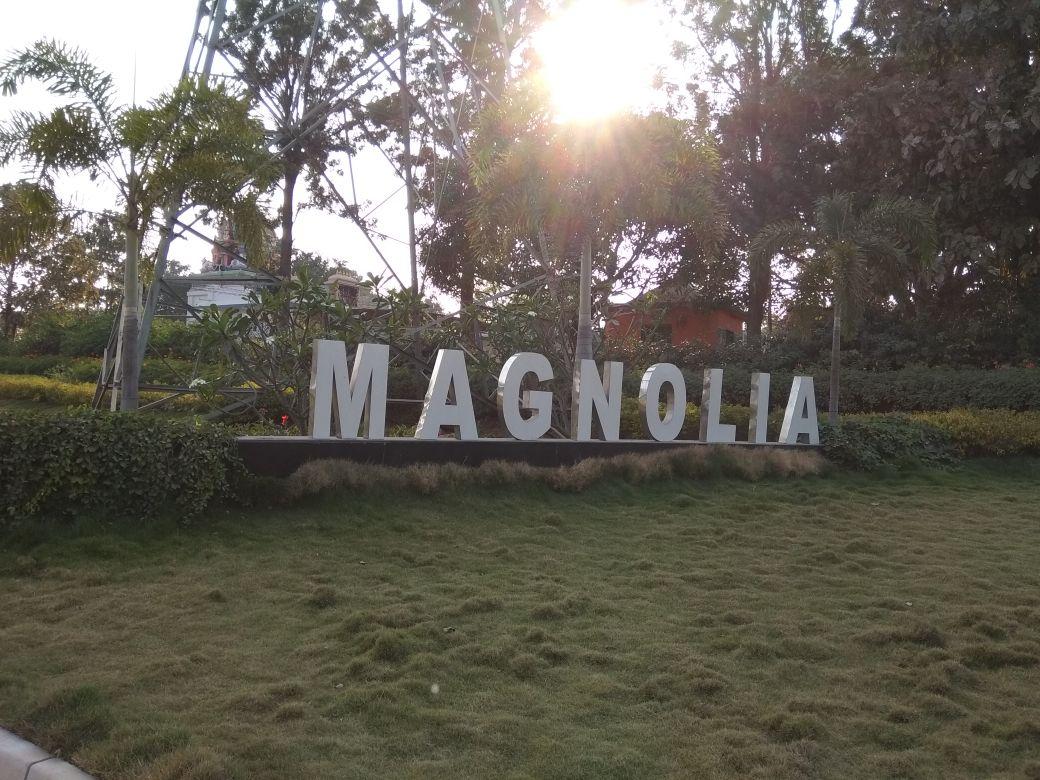 MAGNOLIA TEMPLE TREE